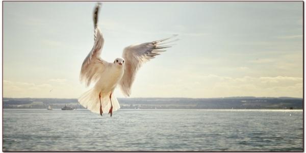 gull-192909_1280